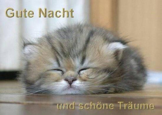 19424244 146999612535704 508524022671245354 n - Gute Nacht