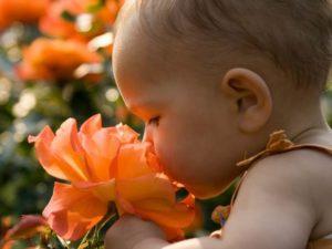 2D274905755459 157289014 baby spring.today inline large 300x225 - Verben