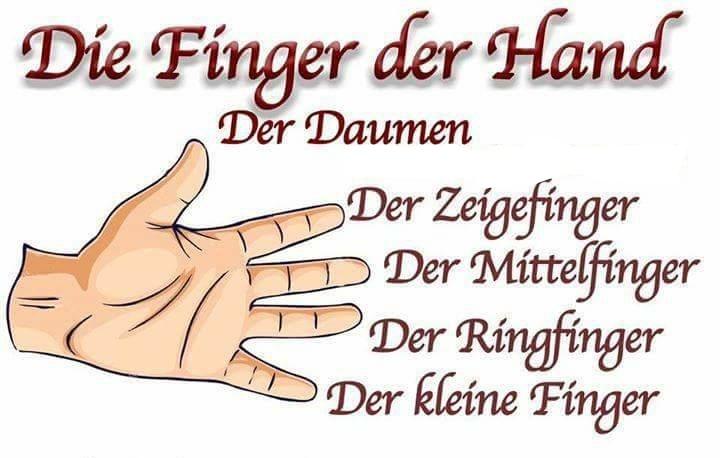 27497374 545989235776404 2012621476 n LI - DIE FINGER DER HAND