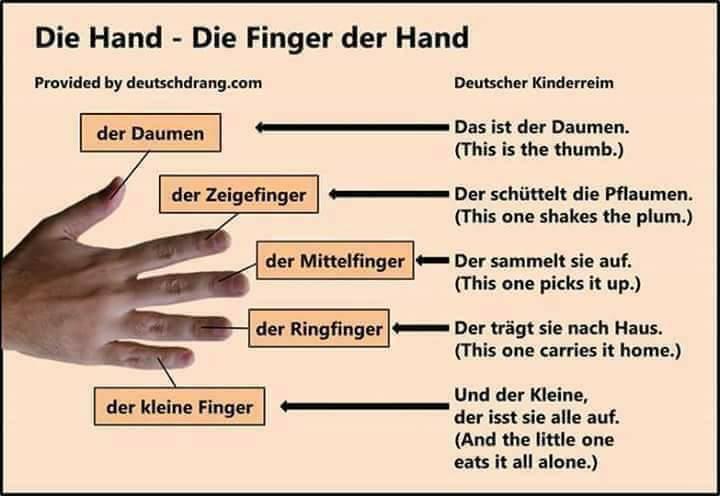 27497149 545989199109741 646110864 n - DIE HAND -DIE FINGEN DER HAND