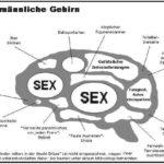 GEHIRN mannlich 150x150 - Neue Witze