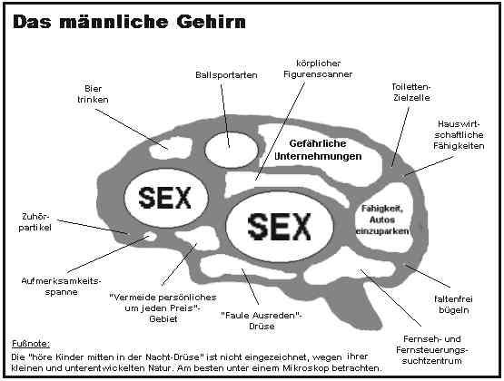 GEHIRN mannlich - Das männliche Gehirn