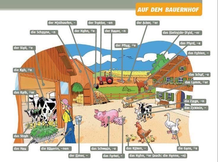 16640947 1230492983701678 5948751999103345985 n - Auf dem Bauernhof