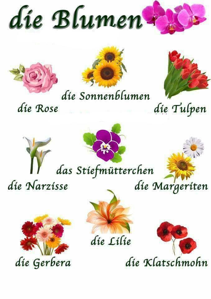 Namen bild blumen mit Blumen