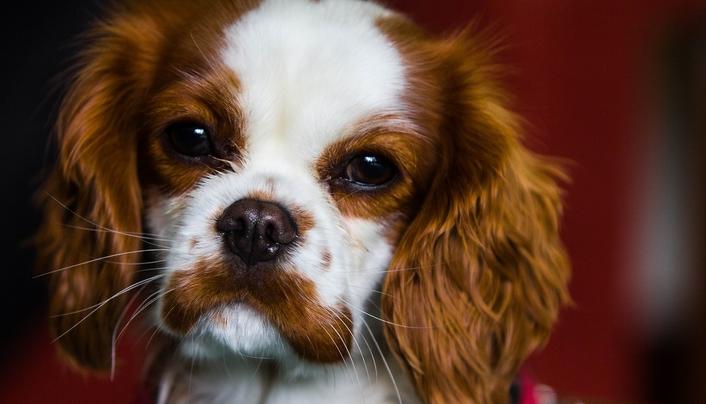 verberb - der Hund-Übung