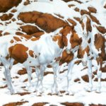 dtfz 150x150 - Versteckspiel: Wie viele Pferde sind auf diesem Bild zu sehen?