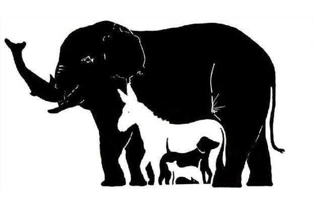 fwerg - Interlligenztest: Wie viele Tiere siehst du?